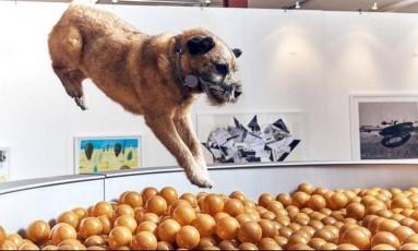 Cão mergulha em obra que imita uma tigela de racão Foto: Reprodução/Facebook/Dominic Wilcox