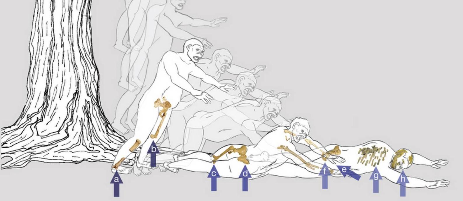 Ilustração mostra como teria sido a queda de Lucy, com indicação dos principais ferimentos observados em seu esqueleto Foto: John Kappelman/Nature