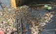 Um apiário atingido perdeu 46 colmeias, com 2,5 milhões de abelhas