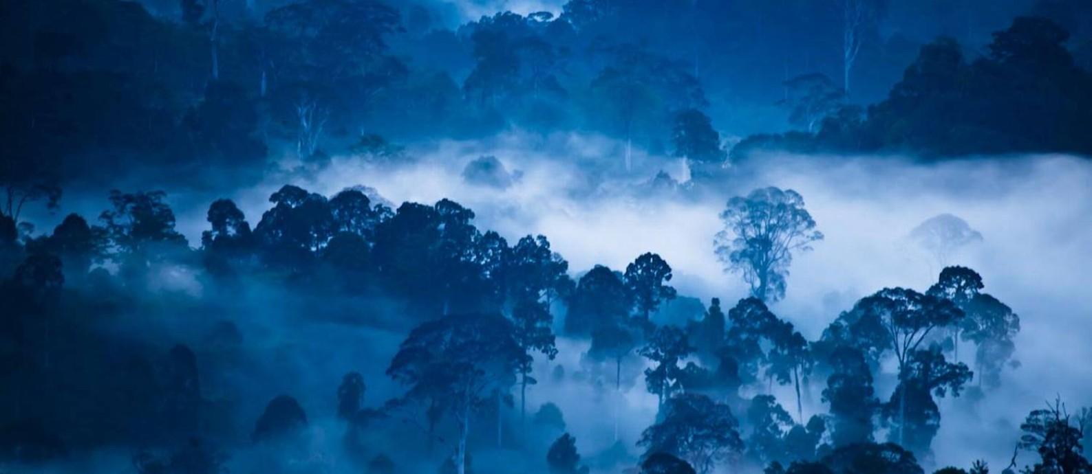 A floresta do Vale de Danum, na ilha de Bornéu: uma das poucas áreas da Terra que ficou livre da ação humana Foto: Divulgação/Liana Joseph