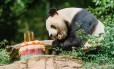 O urso panda Bei Bei comemora seu aniversário