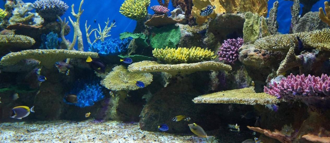 A nova atração da Zona Portuária terá mais de 3 mil animais marinhos de 300 espécies Foto: Divulgação