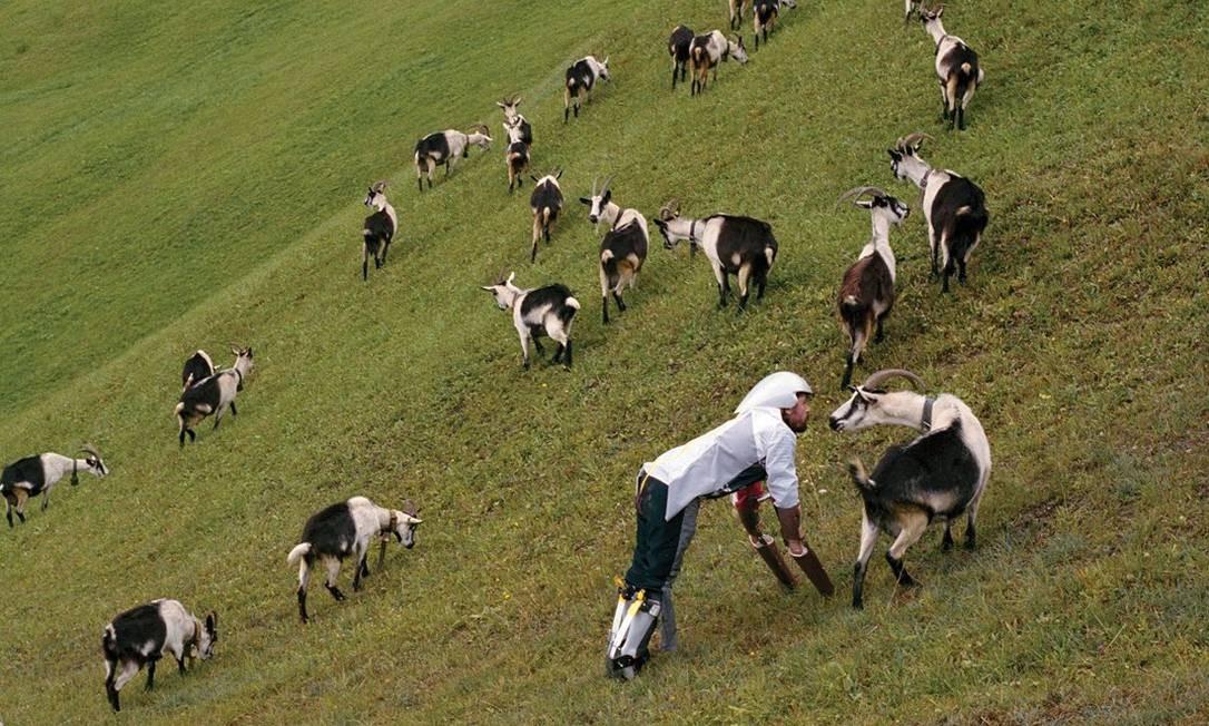 O designer britânico Thomas Thwaites, que construiu e vestiu próteses para viver entre bodes, um dos vencedores do Ig Nobel na categoria biologia Foto: Divulgação