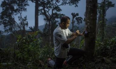 Fauna e flora da Serra da Mantiqueira. Parque Nacional de Itatiaia. Izar Araujo Aximoff, biologo Foto: Fernando Lemos / Agência O Globo