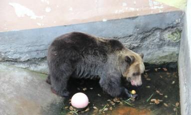 A granada foi descoberta pelo ursa Ewka Foto: FOUR PAWS/Agnieszka Sergiel / DIVULGAÇÃO