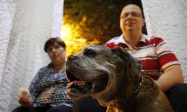 Carlos Fandino e Helga Montano com a cadela Hanna, que tem câncer de pulmão Foto: Marcelo Carnaval / Agência O Globo