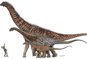 Ilustração mostra comparação entre Austroposeidon (desenho maior), anunciado nesta quarta, o Maxakalisaurus topai e o Gondwanatitan faustoi Foto: Divulgação/Museu de Ciências da Terra