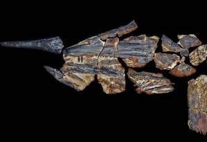 Raro fóssil encontrado na Austrália corresponde a um grande carnívoro dos mares Foto: Reprodução / Kronosaurus Korner
