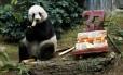 A panda gigante Jia Jia em seu aniversário de 37 anos