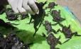Autoridades estimam que ao menos 10 mil rãs morreram