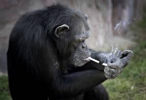 Azalea acende um cigarro em zoológico na capital da Coreia do Norte Foto: Wong Maye-E / AP