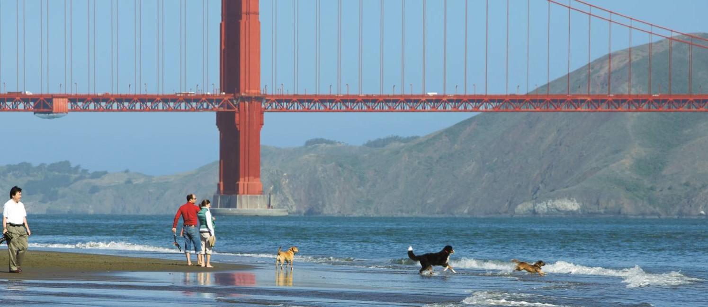 Moradores de São Francisco brincam com seus cachorros aos pés da ponte Golden Gate Foto: Divulgação