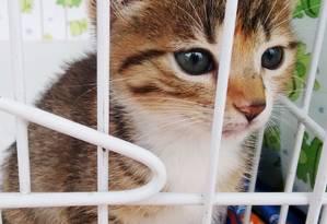 Os filhotes, a partir de 5 meses, já são entregues castrados Foto: Divulgação / Fotos de divulgação