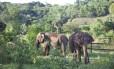 Maia e Guida chegaram ao santuário dia 11 deste mês Foto: Divulgação/ Junia Machado