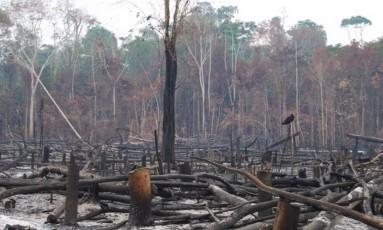 Foto de queimada na Amazônia no fim de novembro do ano passado Foto: Erika Berenguer
