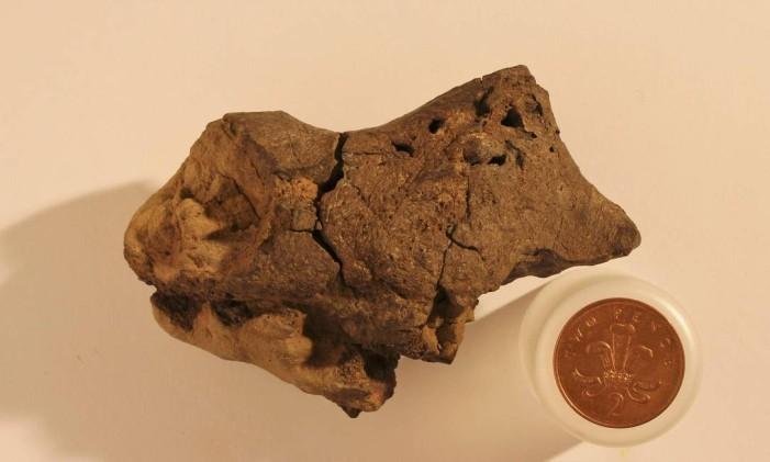Este é o primeiro fragmento descoberto de tecido cerebral fossilizado de um dinossauro Foto: HANDOUT / REUTERS