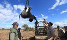 Príncipe Harry toca elefante anestesiado que será removido Foto: AP