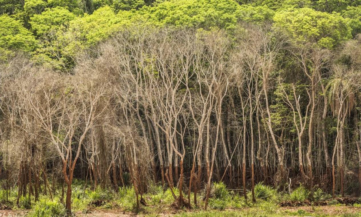 A lama levou muita coisa. Chegou a uns 10 metros. Até hoje dá para ver as marcas nas árvores Foto: Ana Branco / Agência O Globo