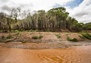 Às margens do Rio Gualaxo do Norte, a floresta é um retrato da destruição das matas, que são Áreas de Preservação Permanente (APPs) devido à sua importância para os recursos hídricos e a biodiversidade Foto: Ana Branco / Agência O Globo