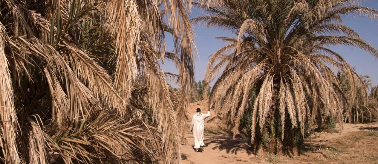 Homem passa por palmeiras mortas no oásis de Tafilalet, no Marrocos, que sediará a 22ª Conferência do Clima a partir da semana que vem: quanto maior a alta na temperatura média global, mais graves serão os efeitos no clima Foto: AFP/FADEL SENNA