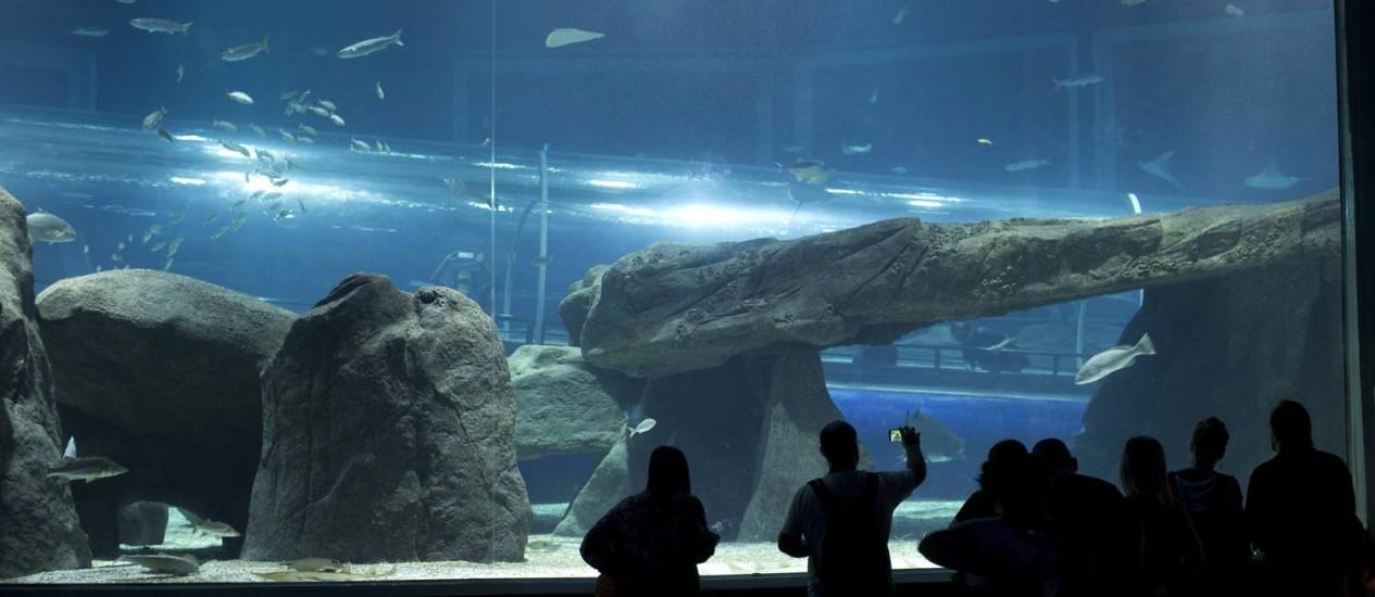 Com capacidade para abrigar até 8 mil animais, espaço é o maior aquário marinho da América do Sul Foto: Márcia Foletto / Agência O Globo