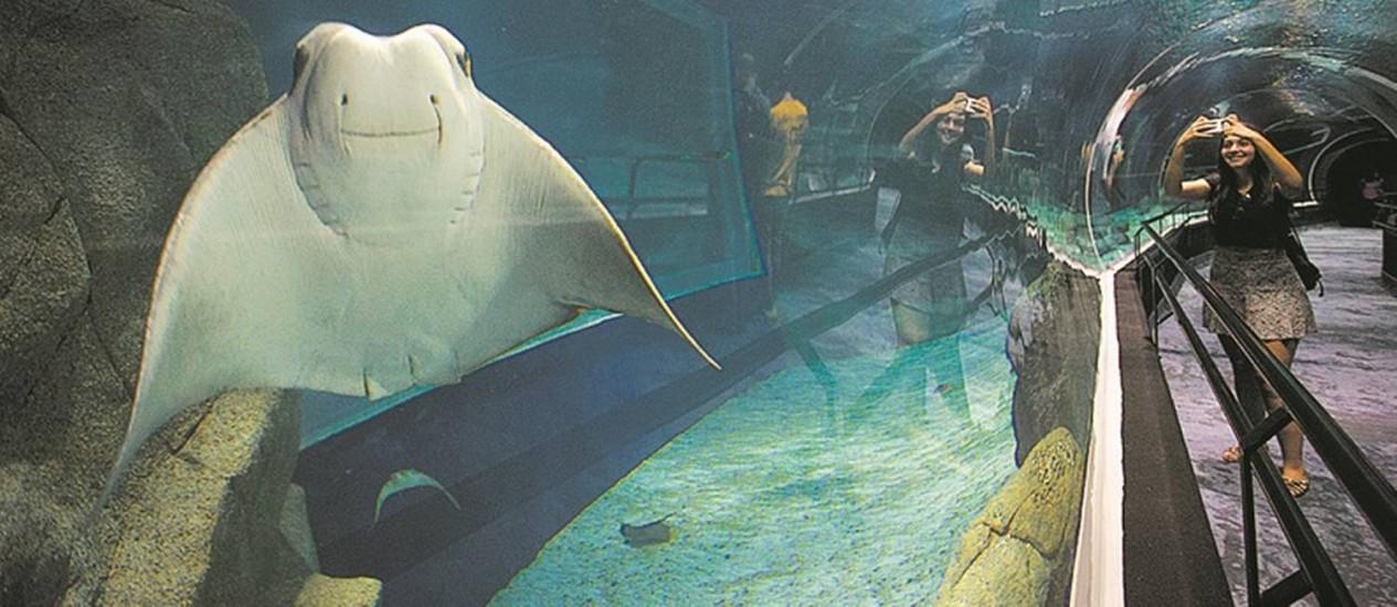 Bem na foto. Uma arraia 'posa' para os visitantes: aquário ontem recebeu apenas quem comprou passaportes anuais Foto: Márcia Foletto