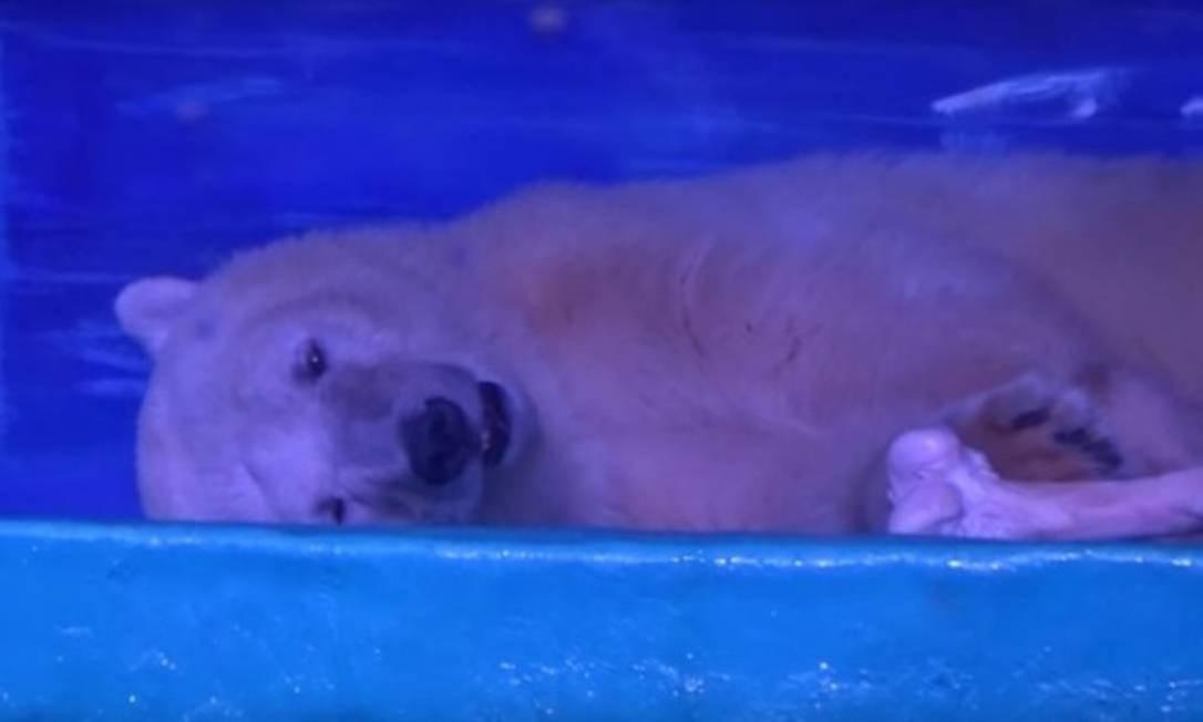 Urso polar 'mais triste do mundo' deixa shopping onde ...