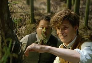 Eddie Redmayne em cena de 'Animais fantásticos e onde habitam' Foto: Divulgação
