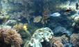Corais sobreviveram a fenômenos que baixaram o nível dos oceanos