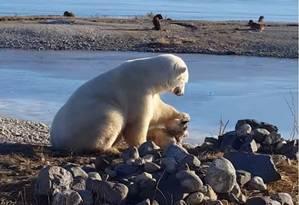 Urso polar faz carinho no cão, que poderia ter virado almoço Foto: REPRODUÇÃO/YOUTUBE