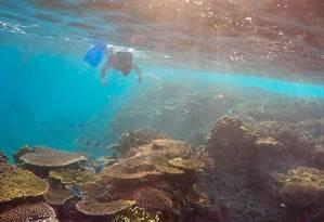 """Oliver Lanyon explora a Grande Barreira de Coral em inspeção na área conhecida como """"Jardins de Corais"""", na ilha de Lady Elliot Foto: DAVID GRAY / REUTERS"""