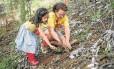 Mão na terra: Denise Thomé, ao lado da neta Rosa, planta uma das 500 mudas de palmito-juçara, no plantio de sábado passado Foto: Daniel Ramalho / Vale Verdejante