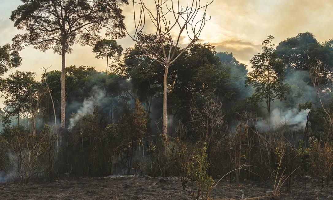 Imagem feita entre setembro de dezembro de 2015 na região da Floresta Nacional do Tapajós Foto: / Divulgação/ Adam Ronan/ Ecofor