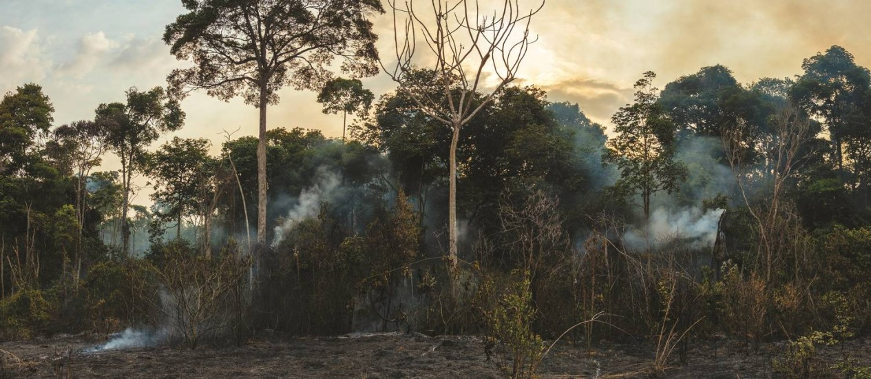Imagem feita entre setembro de dezembro de 2015 na região da Floresta Nacional do Tapajós Foto: Divulgação/ Adam Ronan/ Ecofor