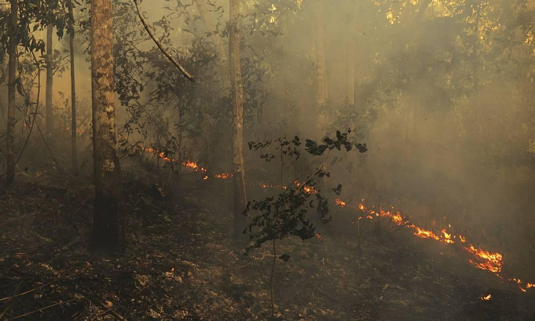 Queimada. Floresta Nacional do Tapajós tomada pelo fogo no último trimestre de 2015 Foto: / Divulgação/ Adam Ronan/ Ecofor