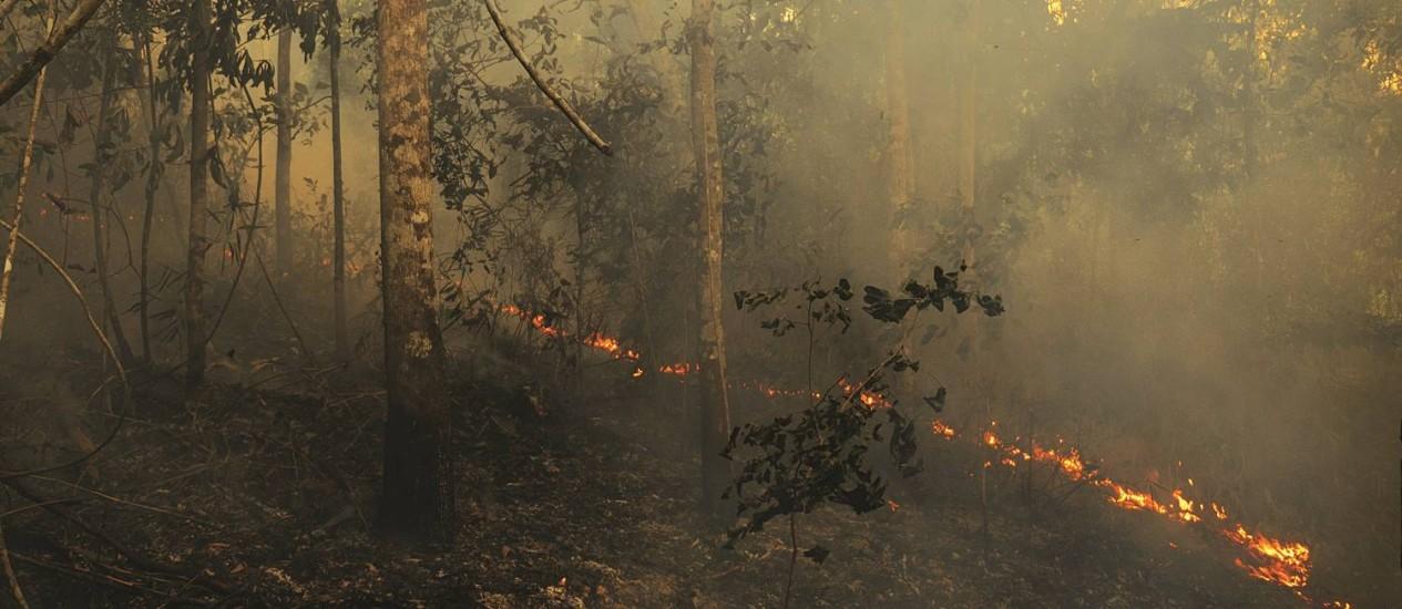 Queimada. Floresta Nacional do Tapajós tomada pelo fogo no último trimestre de 2015 Foto: Divulgação/ Adam Ronan/ Ecofor