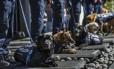 Nove cães policiais foram aposentados após oito anos de serviço na polícia federal mexicana