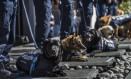 Nove cães policiais foram aposentados após oito anos de serviço na polícia federal mexicana Foto: OMAR TORRES / AFP
