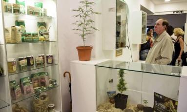 Visitantes observam o acervo do recém inaugurado Museu da Cannabis de Montevidéu Foto: Matilde Campodonico / AP