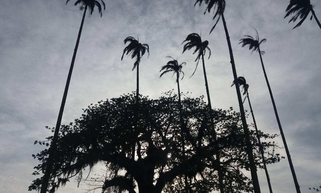 Baobá e as palmeiras-imperiais centenários em frente ao Museu Casa de Quissamã, antigo endereço do poderoso Visconde de Araruama Foto: Eduardo Maia / O Globo