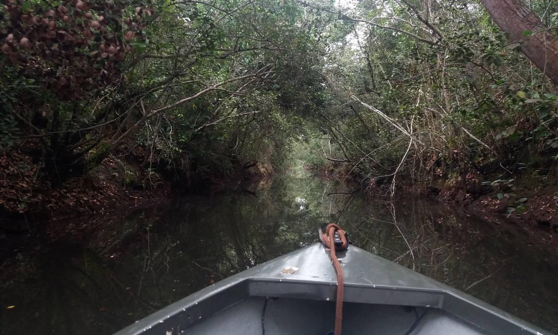 O passeio de barco pelo trecho do Canal Campos-Macaé é um dos destaques do parque nacional. Foto: Eduardo Maia / O Globo
