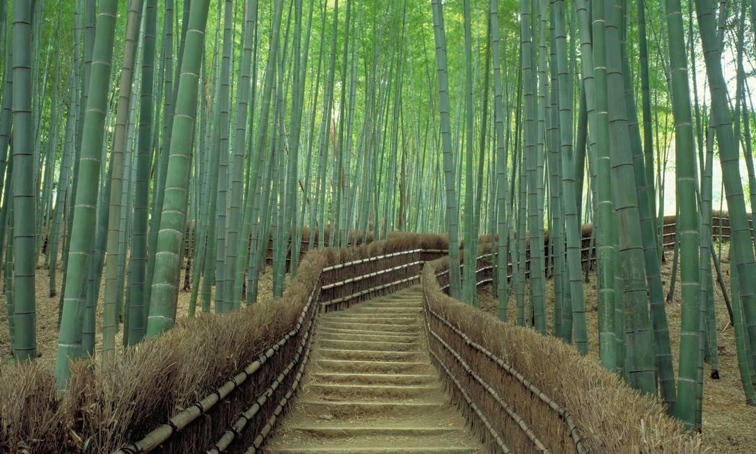 A floresta de bambu em na região de Arashiyama, a meia hora da região central de Kioto Foto: Divulgação JNTO / Agência O Globo