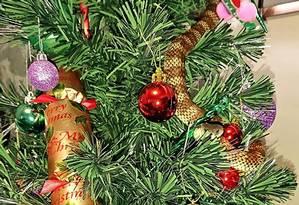 Serpente-tigre se escondeu entre os enfeites da árvore de Natal em casa na Austrália Foto: STR / AFP