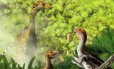 O Limusaurus inextricabilis tem dietas diferentes ao longo da vida