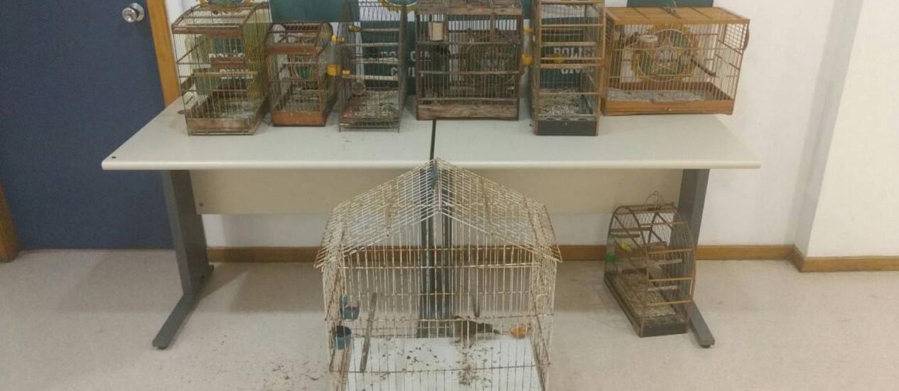 Pássaros silvestres foram apreendidos em Copacabana Foto: Divulgação/ Polícia Civil