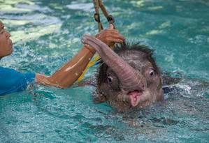 Hidroterapia fortalecerá músculos do animal para que ele possa voltar a andar Foto: ROBERTO SCHMIDT / AFP