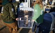 Um cachorro é resgatado de fazenda em Wonju, na Coreia do Sul