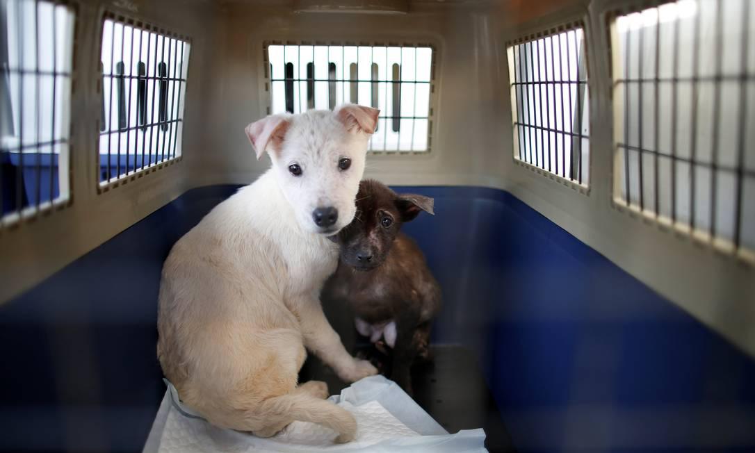 ONG espera que governo sul-coreano proíba a comercialização de carne de cachorro KIM HONG-JI / REUTERS