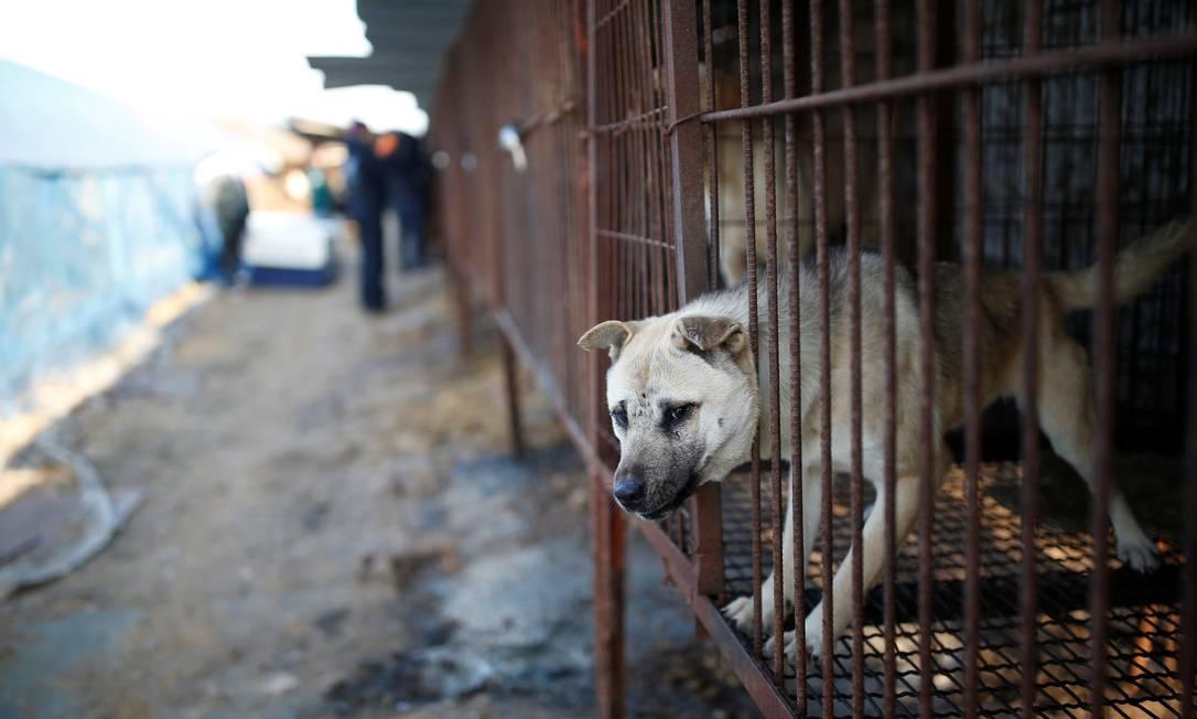 ONG estima que ainda existam 17 mil fazendas de criação de cães para consumo humano na Coreia do Sul KIM HONG-JI / REUTERS