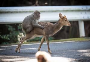 Para os pesquisadores, comportamento pode ter acontecido pela falta de parcerias para o macaco Foto: ALEXANDRE BONNEFOY / AFP
